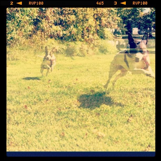 Zoe hops like a rabbit when she runs.